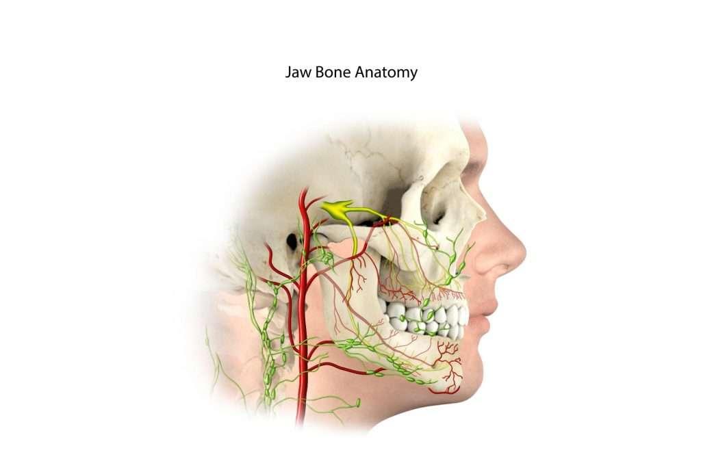 Ramiel Nagel - Anatomie de la machoire